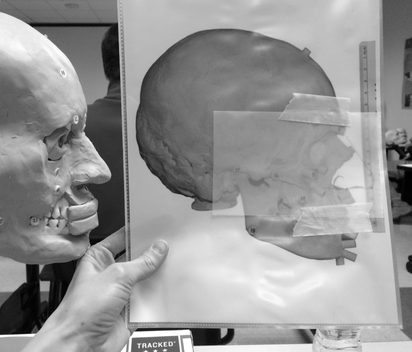 Black and white image of my hand holding up a life-size image of the skull with the nose drawn onto it next to the sculpture for comparison. The sculpture is only partly complete and has two strips of clay across the teeth for the mouth to be created. The eyelids have not been blended with the rest of the face yet.